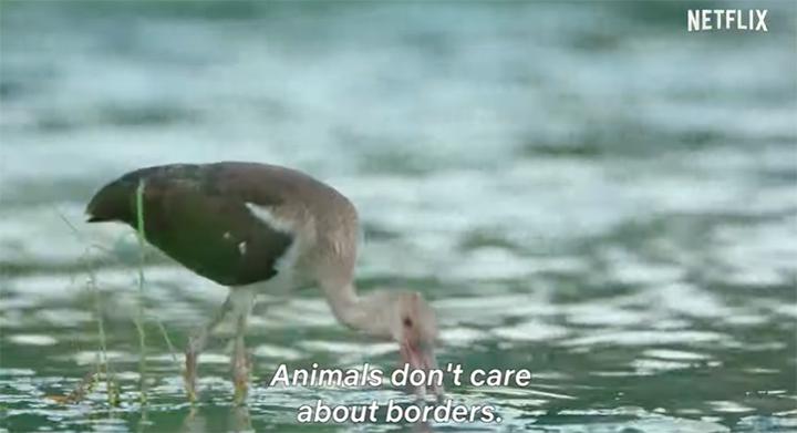 Os animais não se importam com fronteiras